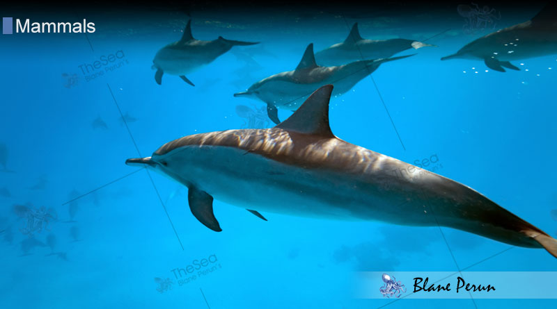 How Long Can Dolphins Hold Their Breath