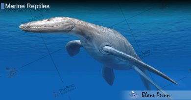 The Largest Marine Reptile