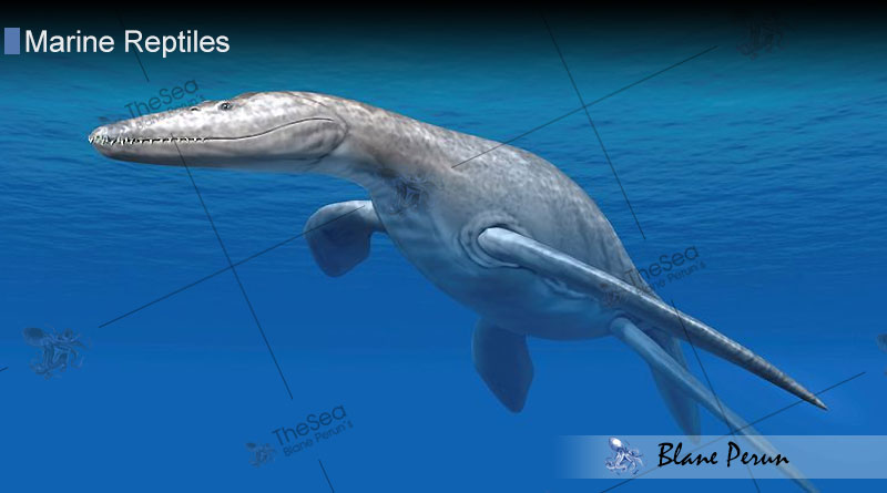 Marine Reptile Facts from Blane Peruns TheSea