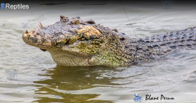 When Did Crocodiles First Appear